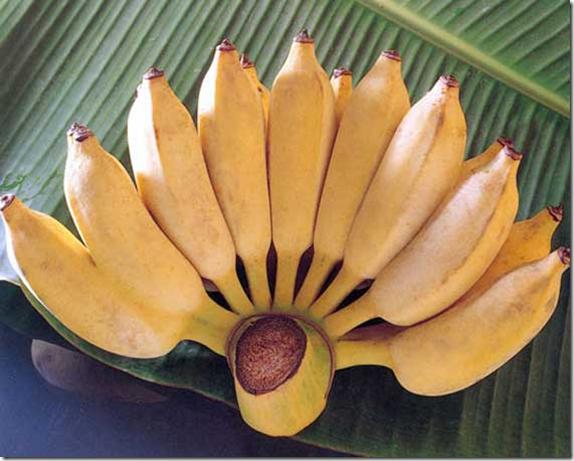 Экзотические фрукты Шри-Ланки бананы