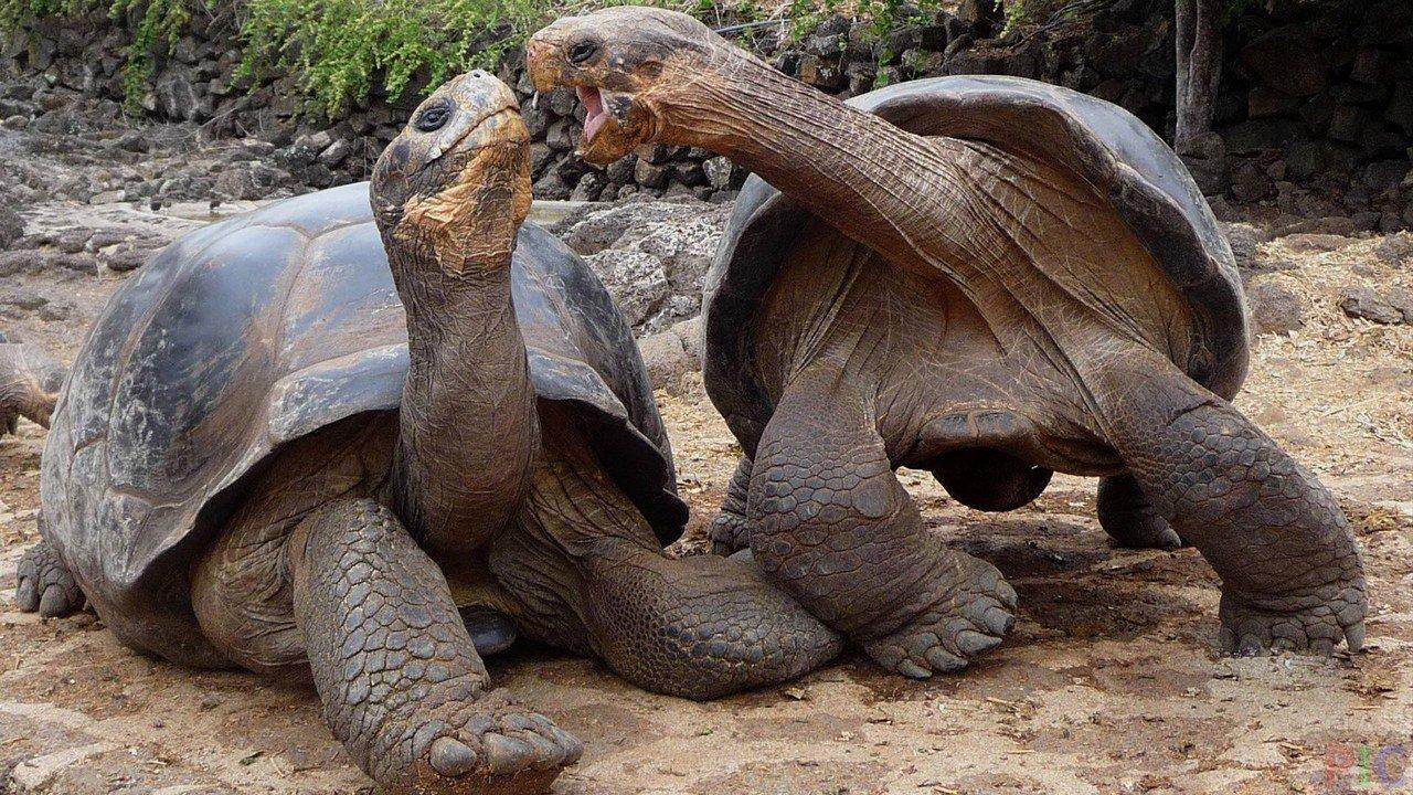 Черепаховая ферма Шри-Ланка