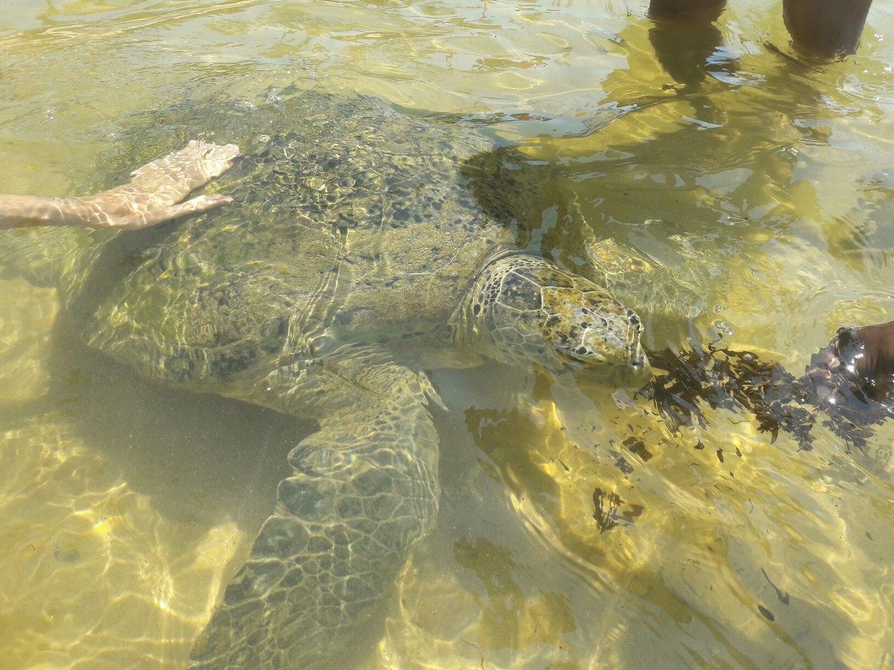 Черепахи на Шри-Ланке