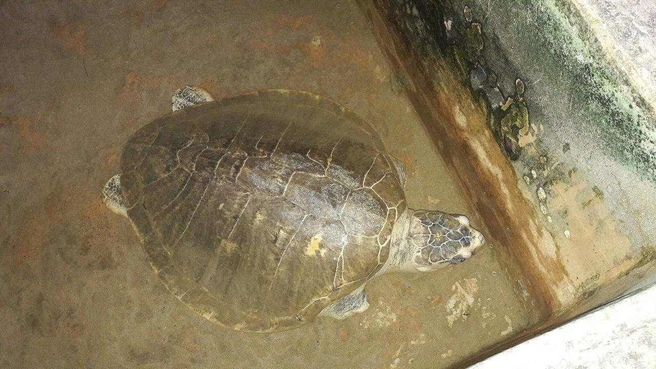 Ферма черепаховая Шри