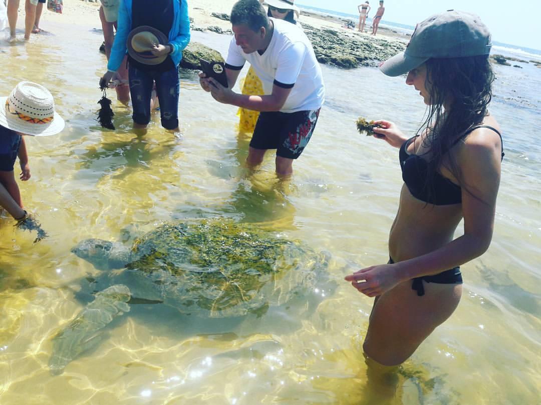 Где черепахи в Хиккадуве