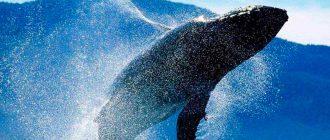 кит шри ланка