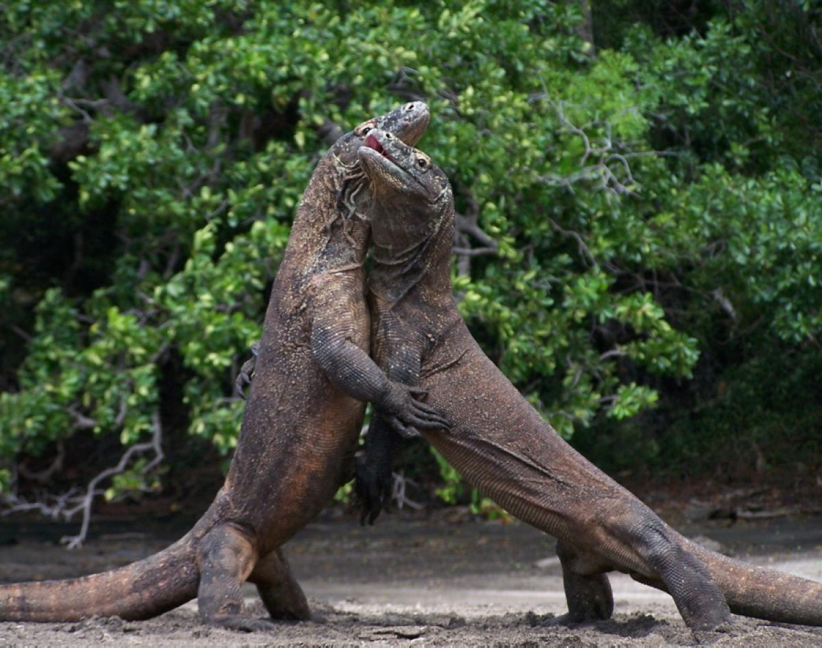 Удивительная битва животных