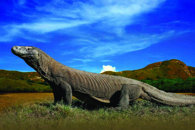 Динозавры острова