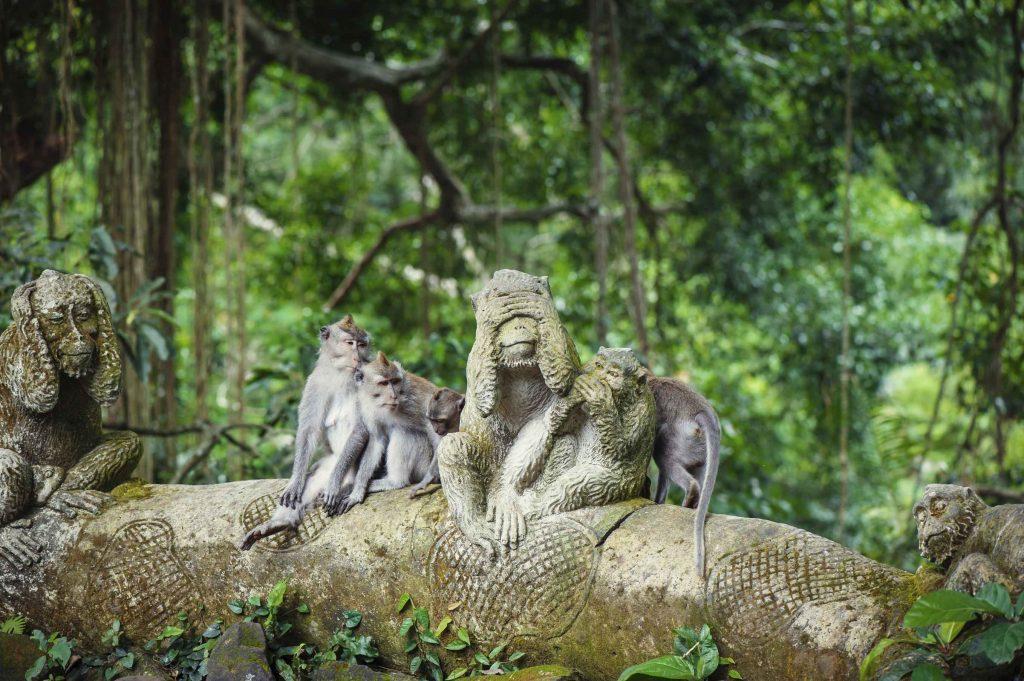 Увлекательный лес Monkey Forest