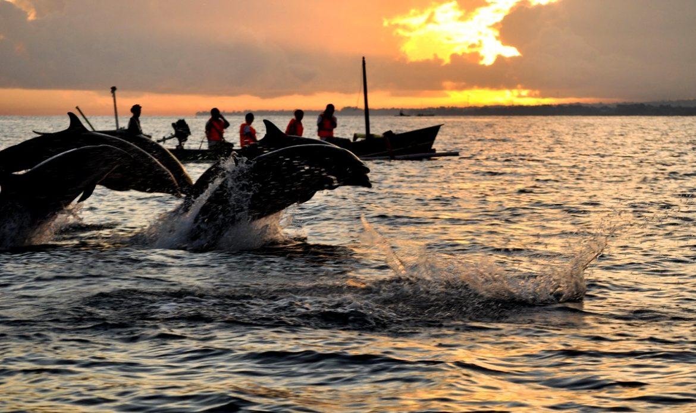 Удивительные дельфины Ловины