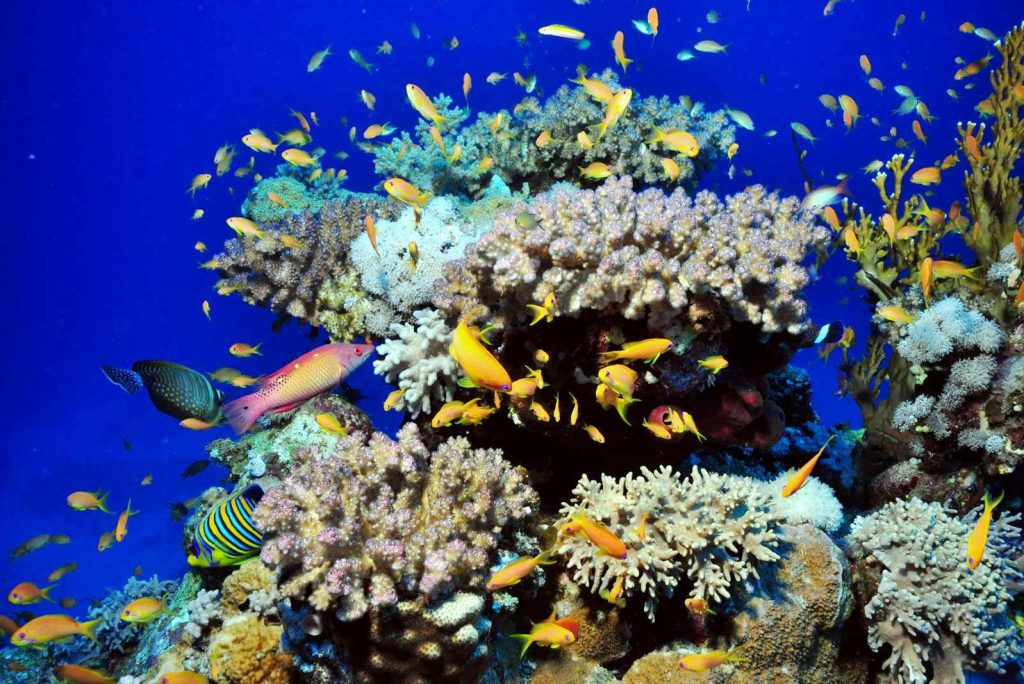 Морская природа на дне моря