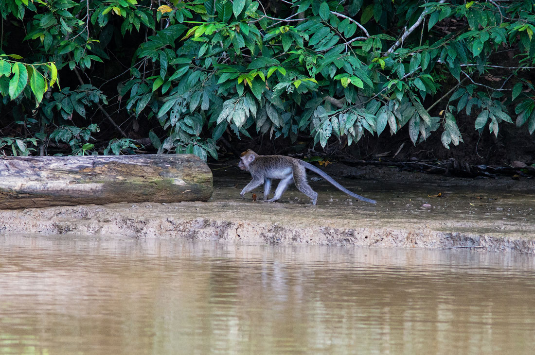 Жители реки