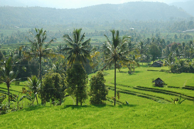 Удивительная природа острова