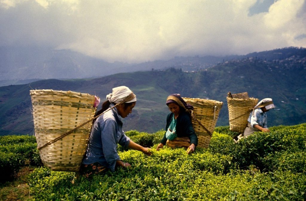 Чай Шри-Ланка