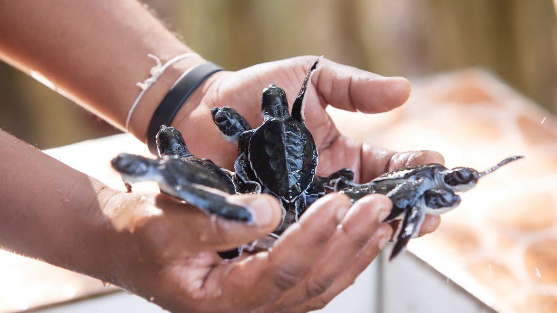 Экскурсия в контактный зоопарк черепах