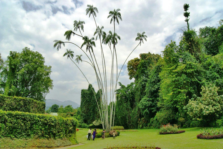 Огромное дерево в саду