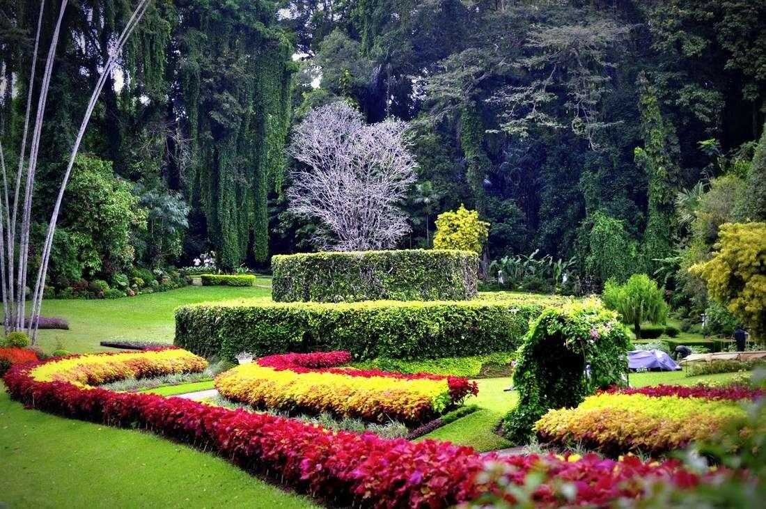 Растения в королевском ботаническом саду