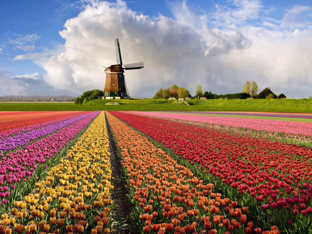 Авиаперелет в Голландияю