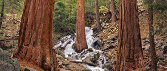 Достопримечательности национального парка Секвойя