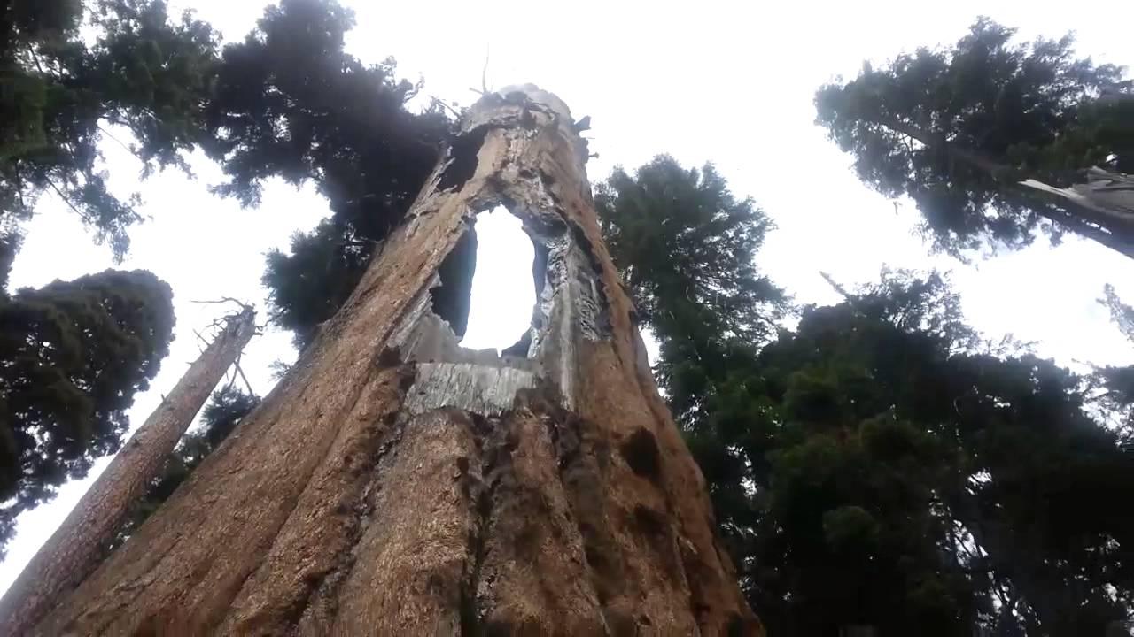 парк Секвойя в Калифорнии
